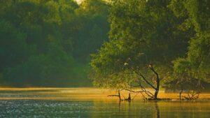 Dimineata in Delta Dunarii