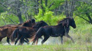 Caii primaverii