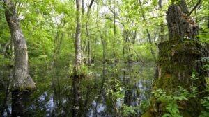 Padurea Letea primavara, la inundatii