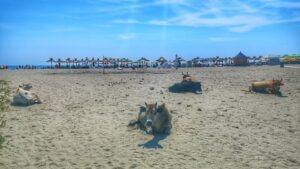 Plaja salbatica Sulina
